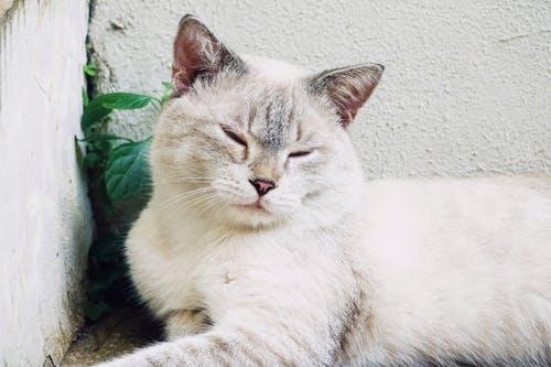 给小猫咪取个萌萌的名字